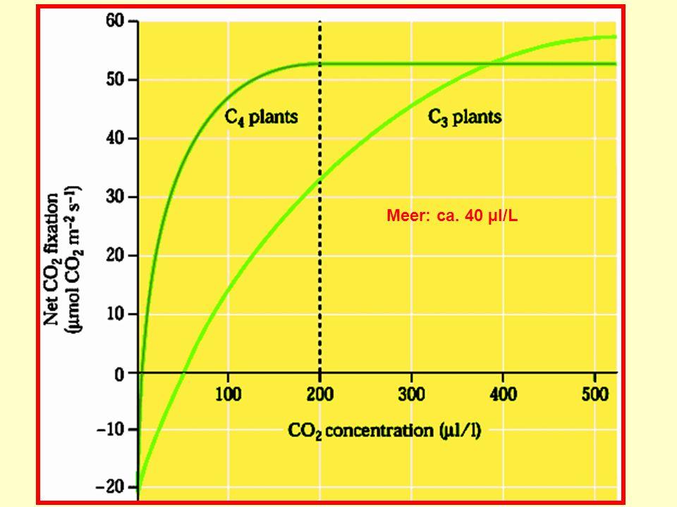 Meer: ca. 40 µl/L
