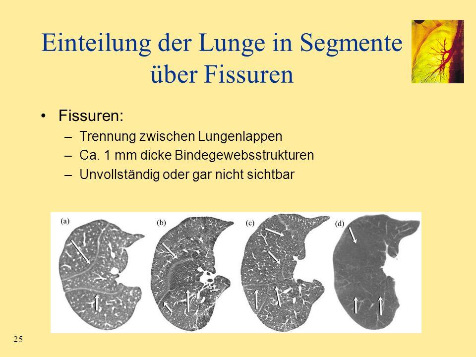25 Einteilung der Lunge in Segmente über Fissuren Fissuren: –Trennung zwischen Lungenlappen –Ca. 1 mm dicke Bindegewebsstrukturen –Unvollständig oder
