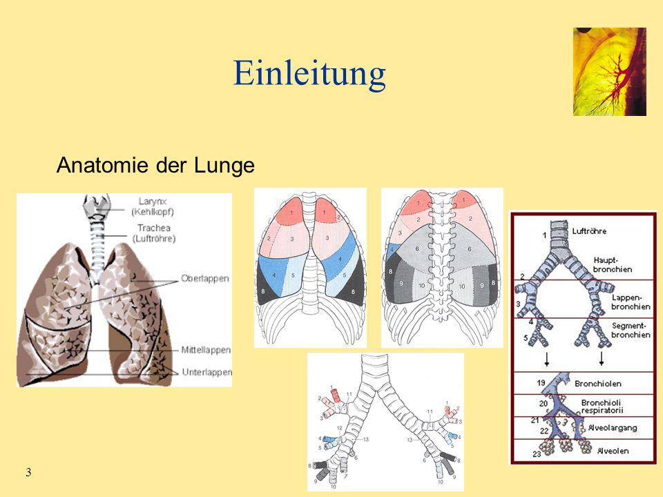 24 Anatomische Reformatierung