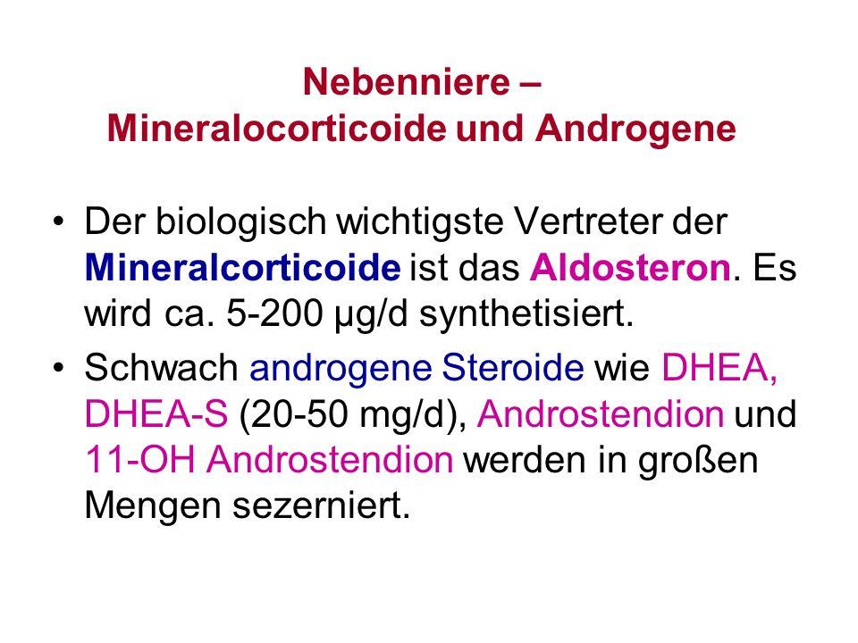 Nebenniere – Mineralocorticoide und Androgene Der biologisch wichtigste Vertreter der Mineralcorticoide ist das Aldosteron. Es wird ca. 5-200 µg/d syn