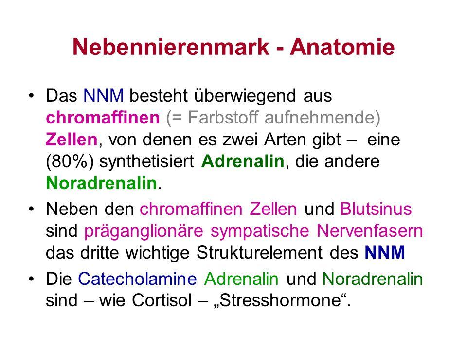 Nebennierenmark - Anatomie Das NNM besteht überwiegend aus chromaffinen (= Farbstoff aufnehmende) Zellen, von denen es zwei Arten gibt – eine (80%) sy