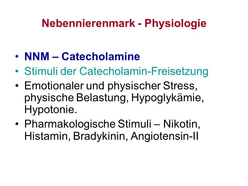 Nebennierenmark - Physiologie NNM – Catecholamine Stimuli der Catecholamin-Freisetzung Emotionaler und physischer Stress, physische Belastung, Hypogly