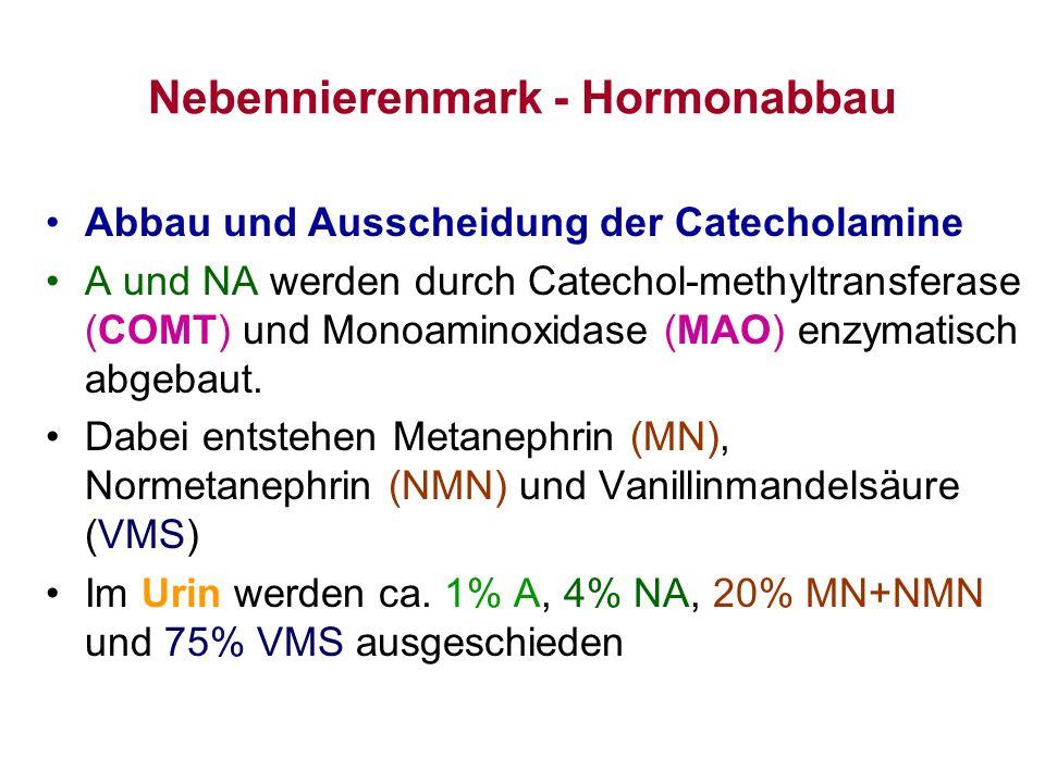 Nebennierenmark - Hormonabbau Abbau und Ausscheidung der Catecholamine A und NA werden durch Catechol-methyltransferase (COMT) und Monoaminoxidase (MA