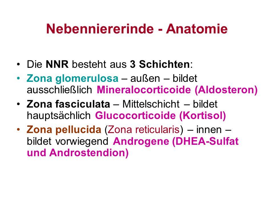 Nebenniererinde - Anatomie Die NNR besteht aus 3 Schichten: Zona glomerulosa – außen – bildet ausschließlich Mineralocorticoide (Aldosteron) Zona fasc