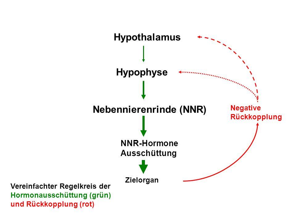Hypothalamus Hypophyse Nebennierenrinde (NNR) NNR-Hormone Ausschüttung Zielorgan Negative Rückkopplung Vereinfachter Regelkreis der Hormonausschüttung