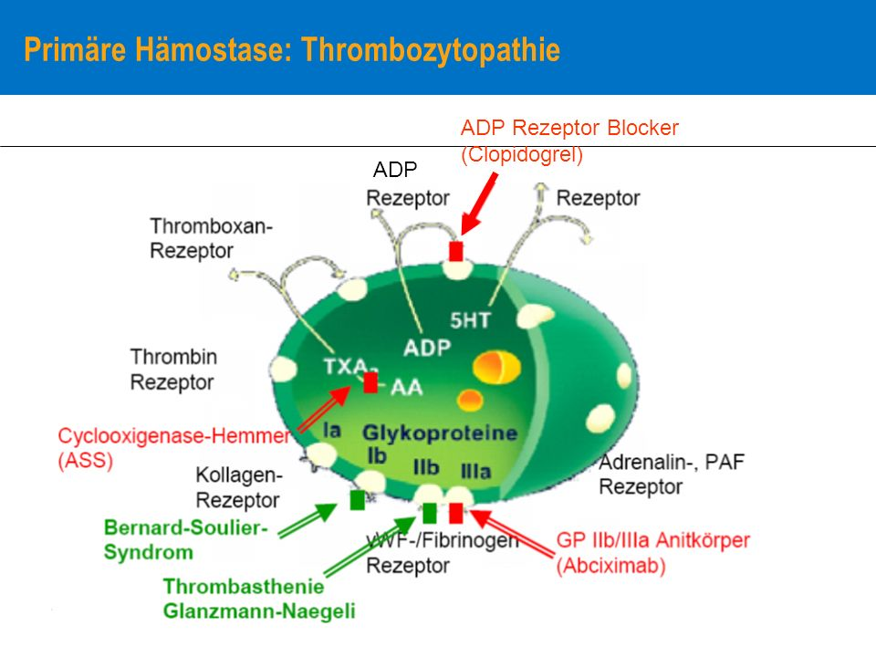 Primäre Hämostase: Thrombozytopathie ADP ADP Rezeptor Blocker (Clopidogrel)