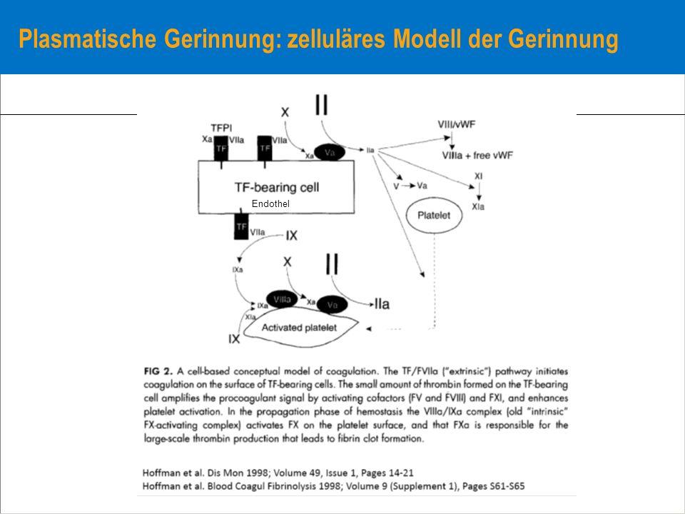 Plasmatische Gerinnung: zelluläres Modell der Gerinnung Endothel