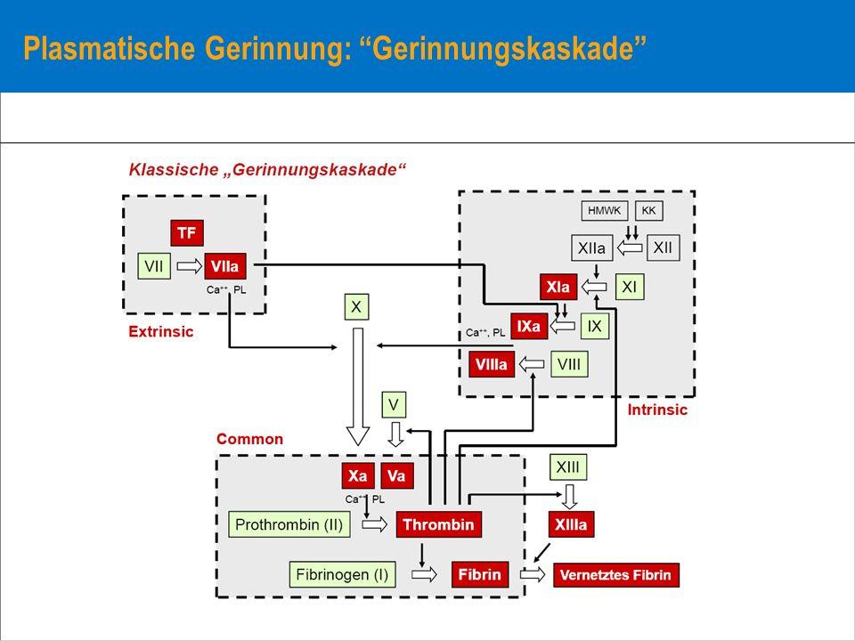 Plasmatische Gerinnung: Gerinnungskaskade
