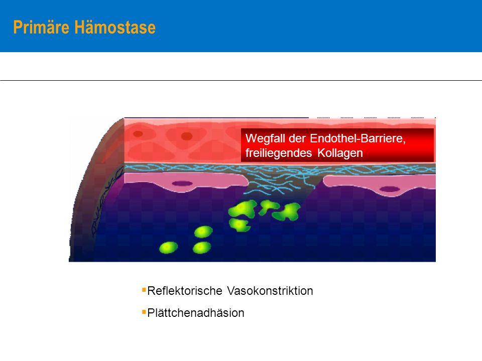 Primäre Hämostase Thrombozytenadhäsion Fibrinogen Thrombin von Willebrand –Faktor Freie Kollagenfibrillen Thrombozytenadhäsion (vWF/GPIb, Kollagen/GP Ia, ) Thrombozyten-Transformation Freisetzung von Faktoren (Thromboxan A2 u.a.) Exprimieren von Oberflächenrez.