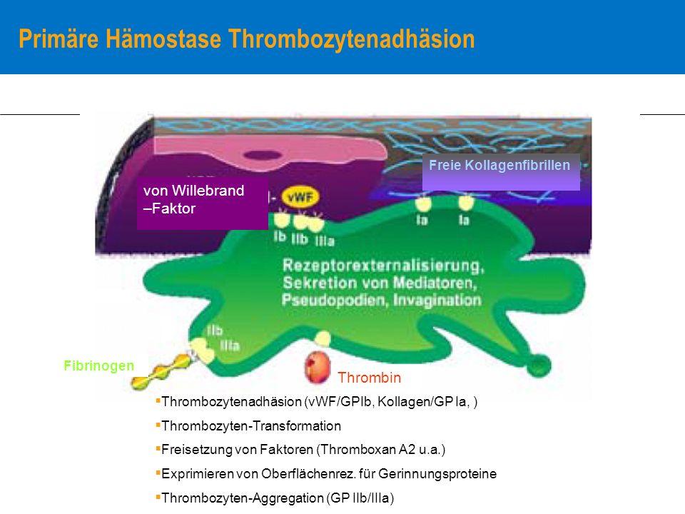 Primäre Hämostase Thrombozytenadhäsion Fibrinogen Thrombin von Willebrand –Faktor Freie Kollagenfibrillen Thrombozytenadhäsion (vWF/GPIb, Kollagen/GP