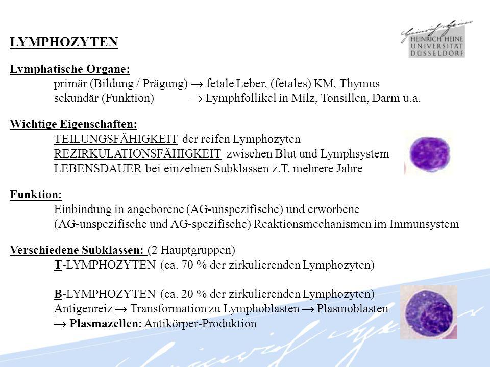LYMPHOZYTEN Lymphatische Organe: primär (Bildung / Prägung) fetale Leber, (fetales) KM, Thymus sekundär (Funktion) Lymphfollikel in Milz, Tonsillen, D