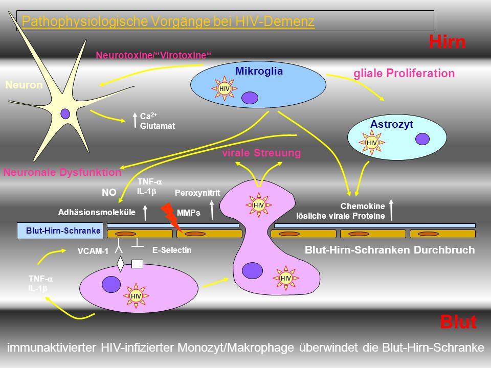 Pathophysiologische Vorgänge bei HIV-Demenz Hirn immunaktivierter HIV-infizierter Monozyt/Makrophage überwindet die Blut-Hirn-Schranke Neuron Neuronal