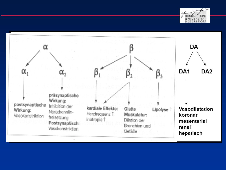 Postsynaptische alpha- und beta-Wirkungen Organ Leber GI-Trakt Pankreas Skelettmuskel Thrombozyten Mastzellen Medulla oblongata alpha + Kontraktion - 0 + Sensibilisierung beta + Erschlaffung + .