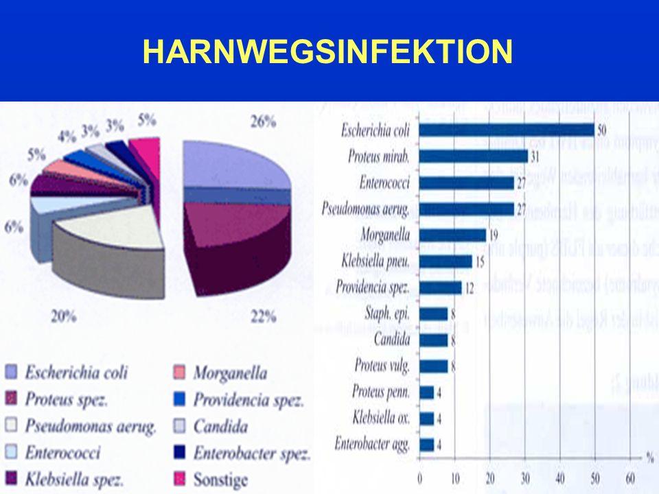 Nicht medikamentöse Therapie Ausreichende Trinkmenge Vollständige, regelmäßige Entleerung der Blase Miktion nach Geschlechtsverkehr Keine übertriebene Genitalhygiene Vermeiden von Spermiziden und Scheiden- diaphragmen Wärmeapplikation bei Schmerzen Obstipation behandeln, Unterkühlung vermeiden HARNWEGSINFEKTION