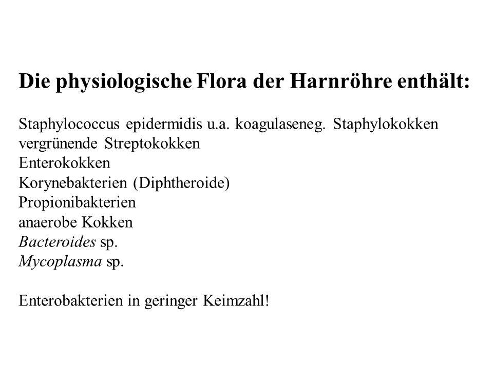 Die physiologische Flora der Harnröhre enthält: Staphylococcus epidermidis u.a. koagulaseneg. Staphylokokken vergrünende Streptokokken Enterokokken Ko