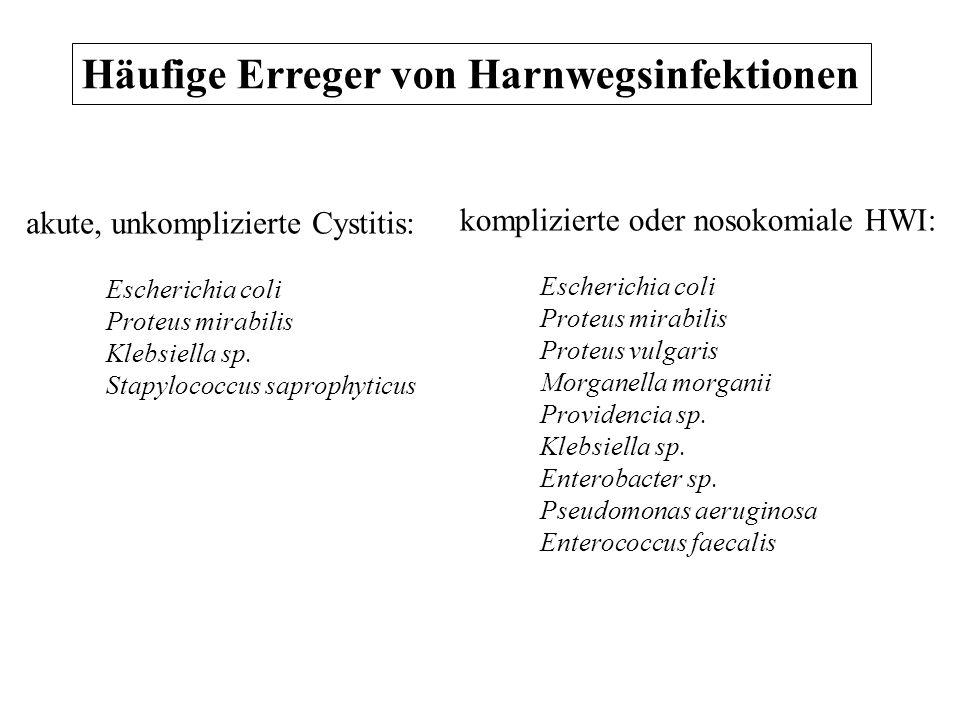 Häufige Erreger von Harnwegsinfektionen akute, unkomplizierte Cystitis: Escherichia coli Proteus mirabilis Klebsiella sp. Stapylococcus saprophyticus