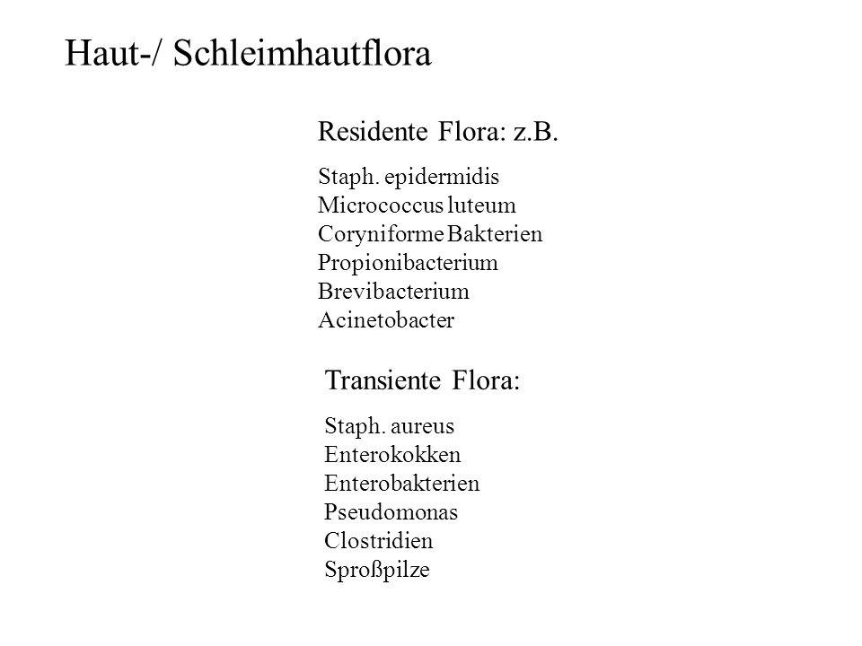 Haut-/ Schleimhautflora Residente Flora: z.B. Staph. epidermidis Micrococcus luteum Coryniforme Bakterien Propionibacterium Brevibacterium Acinetobact