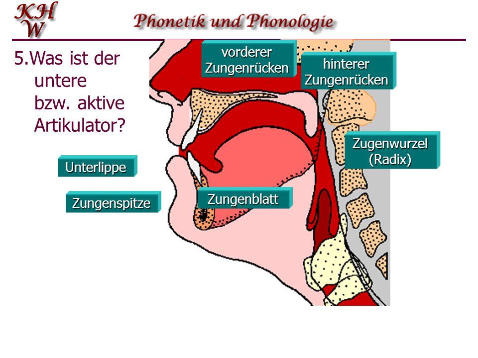 Oberlippe Oberzähne Zahndamm harter Gaumen weicher Gaumen Stimmlippen (Glottis) Pharynx Uvula (Zäpfchen) Kehlkopf (Larynx) 6.Was ist der passive Artikulator?