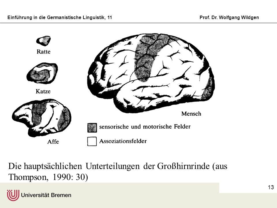 Einführung in die Germanistische Linguistik, 11Prof. Dr. Wolfgang Wildgen 13 Die hauptsächlichen Unterteilungen der Großhirnrinde (aus Thompson, 1990: