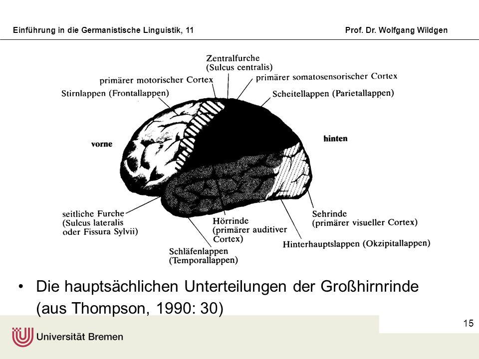 Einführung in die Germanistische Linguistik, 11Prof. Dr. Wolfgang Wildgen 15 Die hauptsächlichen Unterteilungen der Großhirnrinde (aus Thompson, 1990: