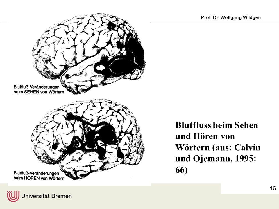 Einführung in die Germanistische Linguistik, 11Prof. Dr. Wolfgang Wildgen 16 Blutfluss beim Sehen und Hören von Wörtern (aus: Calvin und Ojemann, 1995