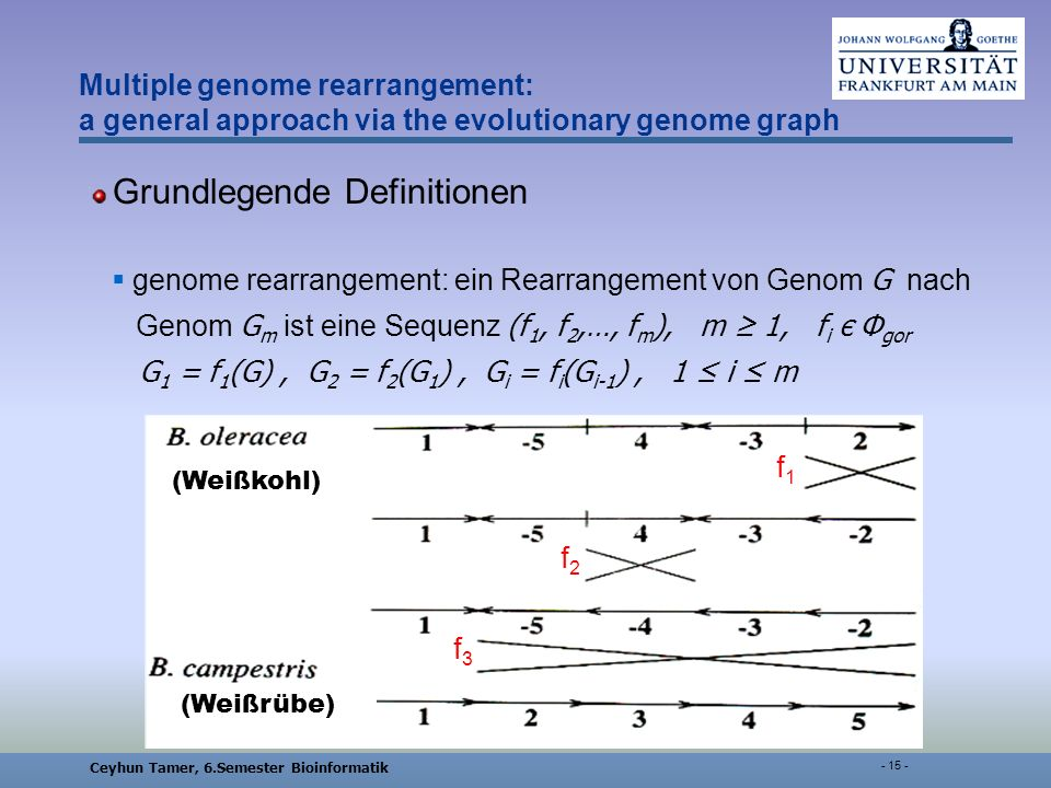 Ceyhun Tamer, 6.Semester Bioinformatik - 15 - Multiple genome rearrangement: a general approach via the evolutionary genome graph Grundlegende Definitionen genome rearrangement: ein Rearrangement von Genom G nach Genom G m ist eine Sequenz (f 1, f 2,…, f m ), m 1, f i є Φ gor G 1 = f 1 (G), G 2 = f 2 (G 1 ), G i = f i (G i-1 ), 1 i m (Weißkohl) (Weißrübe) f1f1 f2f2 f3f3
