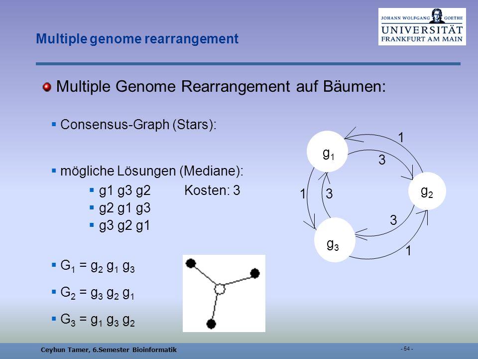 Ceyhun Tamer, 6.Semester Bioinformatik - 54 - Multiple genome rearrangement Multiple Genome Rearrangement auf Bäumen: Consensus-Graph (Stars): mögliche Lösungen (Mediane): g1 g3 g2Kosten: 3 g2 g1 g3 g3 g2 g1 G 1 = g 2 g 1 g 3 G 2 = g 3 g 2 g 1 G 3 = g 1 g 3 g 2 g1g1 g3g3 g2g2 1 1 1 3 3 3