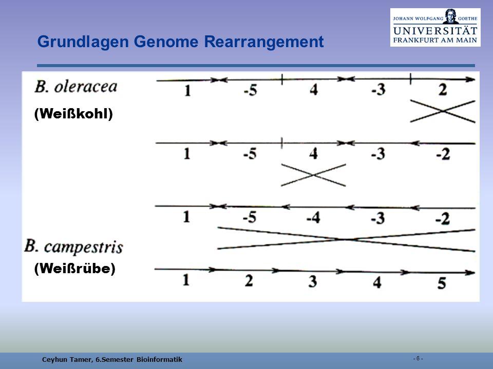 Ceyhun Tamer, 6.Semester Bioinformatik - 17 - Multiple genome rearrangement: a general approach via the evolutionary genome graph Grundlegende Definitionen Inversionen: A = (a 1, a 2,…, a n ), B = (b 1, b 2,…, b n ) f є Φ gor ist eine Inversion einer Subsequenz A 1 = (a k, a k+1,…, a k+m ), wenn: b i = a i, 1 i k-1 oder k+m+1 i n b k+i = a k+(m-i), 0 i m a 1,…,a k-1, a k,a k+1, …,a k+m, a k+m+1,…,a n a 1,…,a k-1, a k+m,a k+m-1, …,a k, a k+m+1,…,a n Genom A: Genom B: