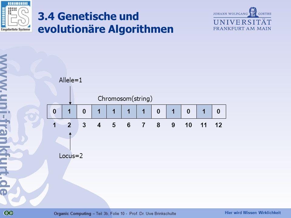 Hier wird Wissen Wirklichkeit Organic Computing – Teil 3b, Folie 10 - Prof. Dr. Uwe Brinkschulte 121110987654321 010101111010 Allele=1 Locus=2 Chromos