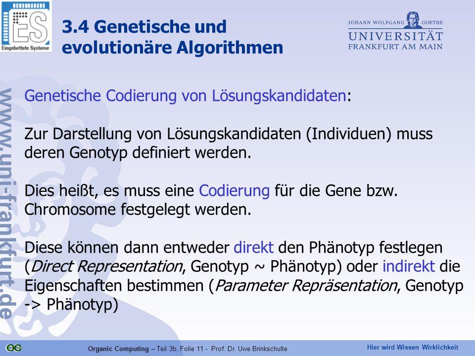 Hier wird Wissen Wirklichkeit Organic Computing – Teil 3b, Folie 11 - Prof. Dr. Uwe Brinkschulte 3.4 Genetische und evolutionäre Algorithmen Genetisch