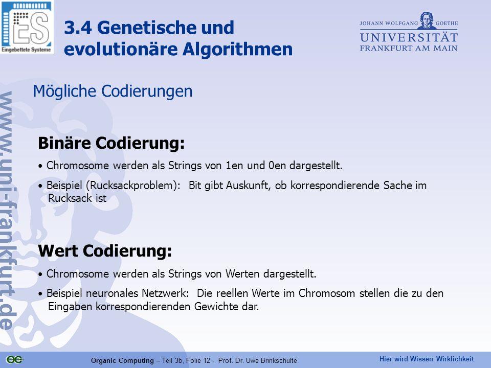 Hier wird Wissen Wirklichkeit Organic Computing – Teil 3b, Folie 12 - Prof. Dr. Uwe Brinkschulte Mögliche Codierungen Binäre Codierung: Chromosome wer