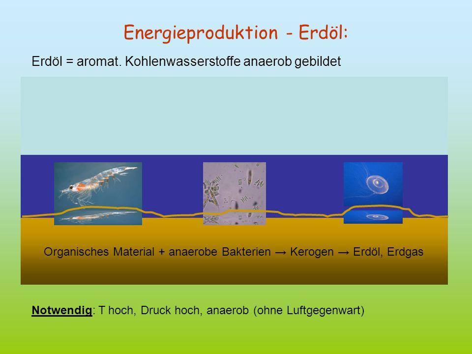 Energieproduktion - Erdöl: Erdöl = aromat. Kohlenwasserstoffe anaerob gebildet Organisches Material + anaerobe Bakterien Kerogen Erdöl, Erdgas Notwend