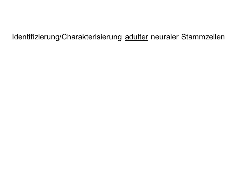 Identifizierung/Charakterisierung adulter neuraler Stammzellen