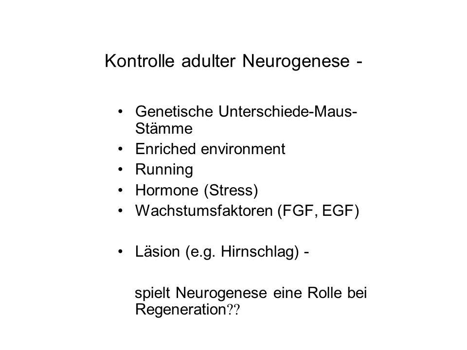 Kontrolle adulter Neurogenese - Genetische Unterschiede-Maus- Stämme Enriched environment Running Hormone (Stress) Wachstumsfaktoren (FGF, EGF) Läsion
