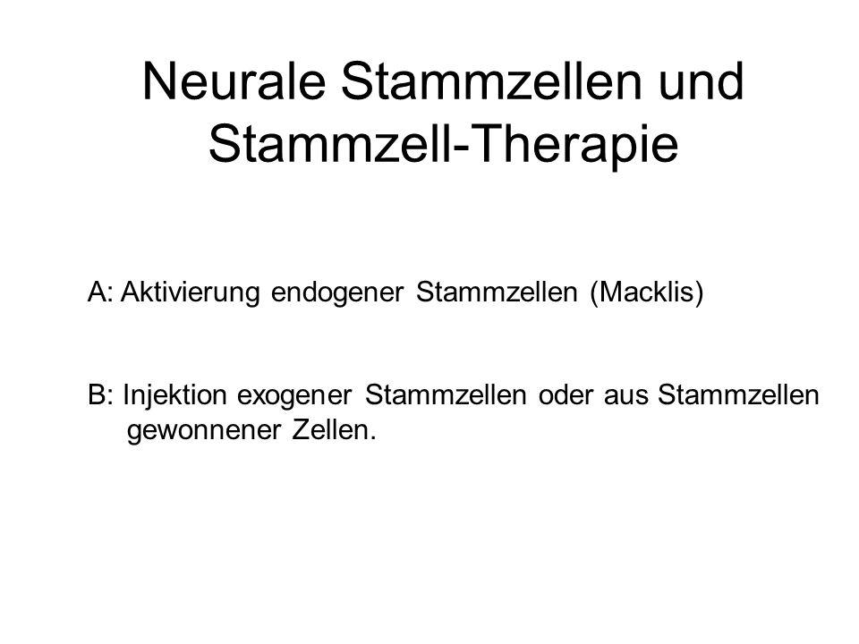 Neurale Stammzellen und Stammzell-Therapie A: Aktivierung endogener Stammzellen (Macklis) B: Injektion exogener Stammzellen oder aus Stammzellen gewon