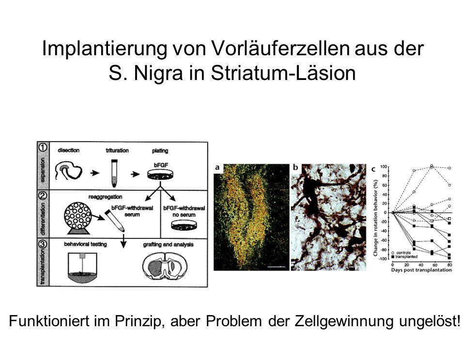 Implantierung von Vorläuferzellen aus der S. Nigra in Striatum-Läsion Funktioniert im Prinzip, aber Problem der Zellgewinnung ungelöst!