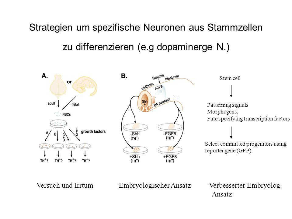 Strategien um spezifische Neuronen aus Stammzellen zu differenzieren (e.g dopaminerge N.) Versuch und Irrtum Embryologischer Ansatz Verbesserter Embry