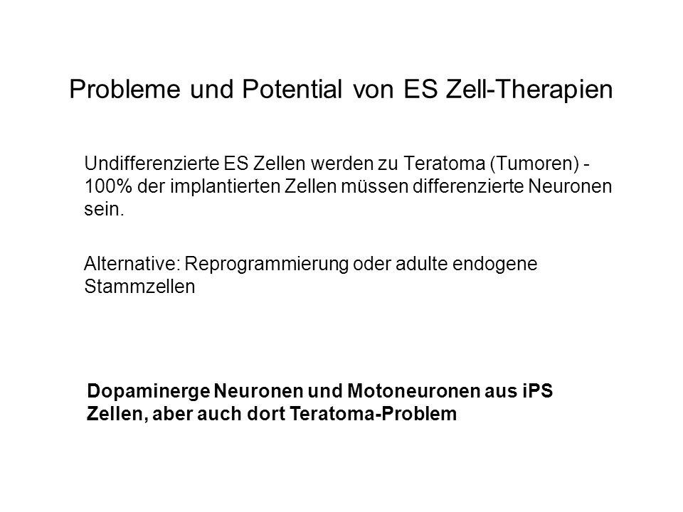 Probleme und Potential von ES Zell-Therapien Undifferenzierte ES Zellen werden zu Teratoma (Tumoren) - 100% der implantierten Zellen müssen differenzi