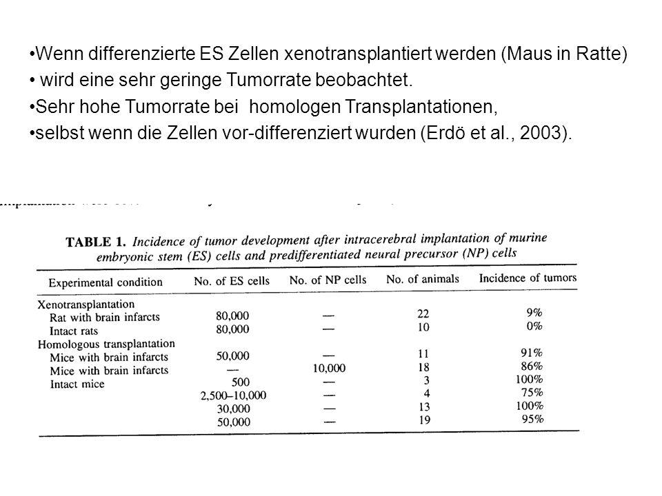 Wenn differenzierte ES Zellen xenotransplantiert werden (Maus in Ratte) wird eine sehr geringe Tumorrate beobachtet. Sehr hohe Tumorrate bei homologen