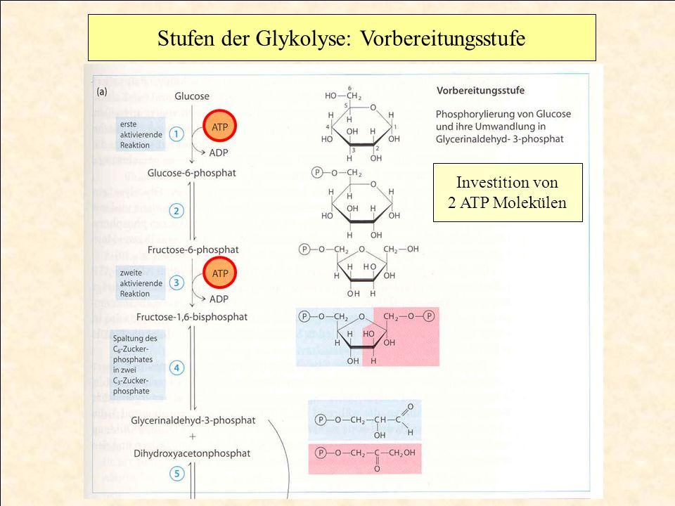 Aldolase hydrolysiert Fructose-1,6-bisphosphat zu Triosehosphaten