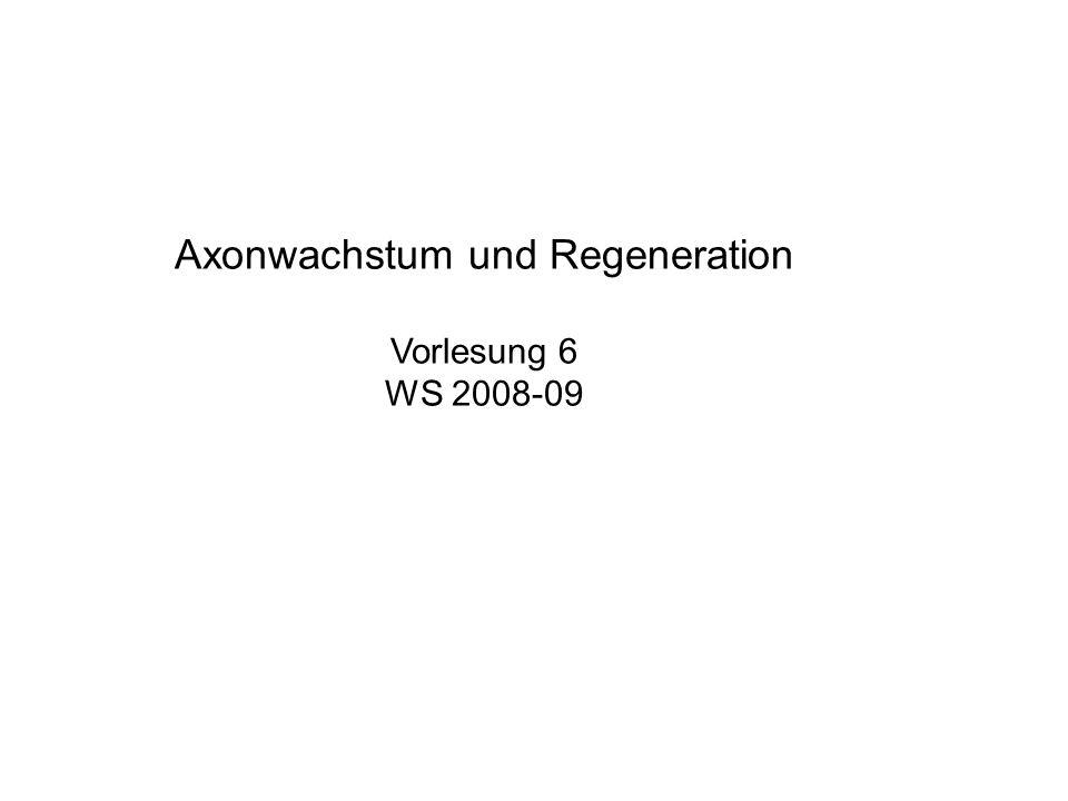 Nogo Proteinfamilie (Nogo A, B, und C – alternatives Spleißen) 2 TM Bereiche Exprimiert von Oligodendrozyten, nicht von Schwannzellen Exprimiert bei Säugern, NICHT bei Amphibien und Fischen Lokalisiert im ZNS Myelin Besitzt einen Rezeptor auf Axonen (NgR-GPI Anker)