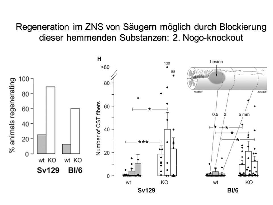 Regeneration im ZNS von Säugern möglich durch Blockierung dieser hemmenden Substanzen: 2. Nogo-knockout