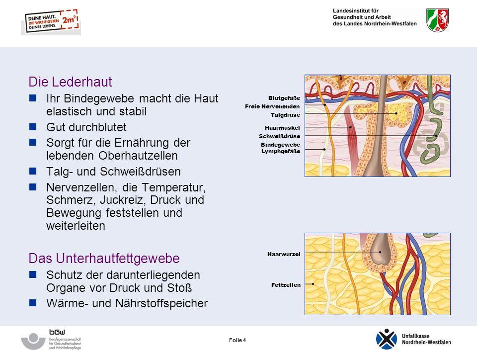 Folie 3 Die Oberhaut Durchschnittliche Dicke: 0,1 mm Schutz des darunterliegenden Gewebes vor Verletzungen, vor Krankheitserregern und vor Schadstoffe