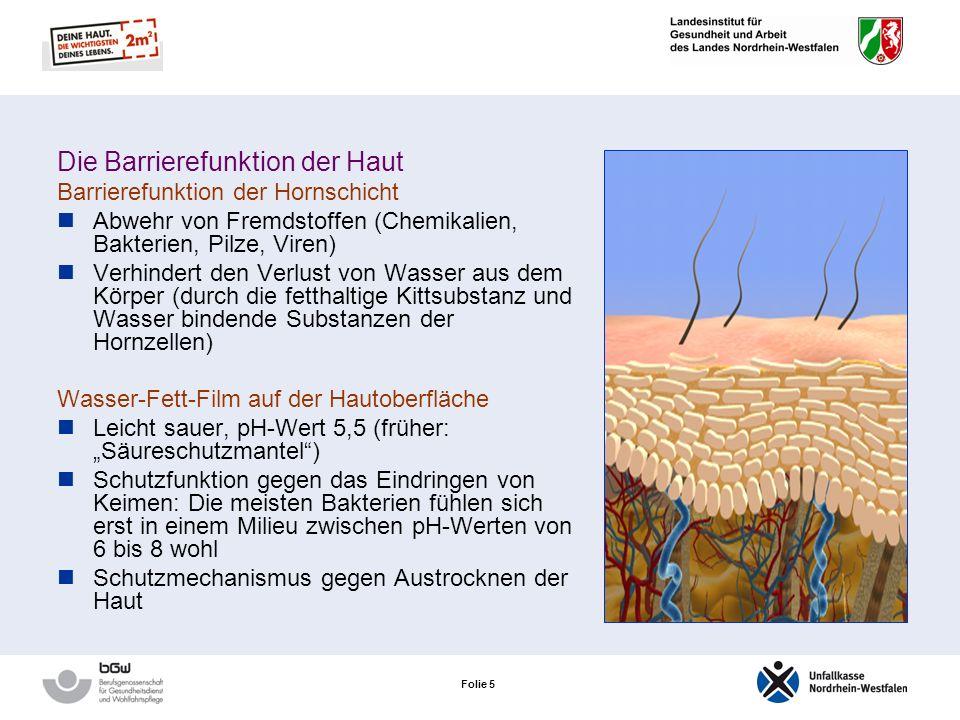 Folie 4 Die Lederhaut Ihr Bindegewebe macht die Haut elastisch und stabil Gut durchblutet Sorgt für die Ernährung der lebenden Oberhautzellen Talg- un