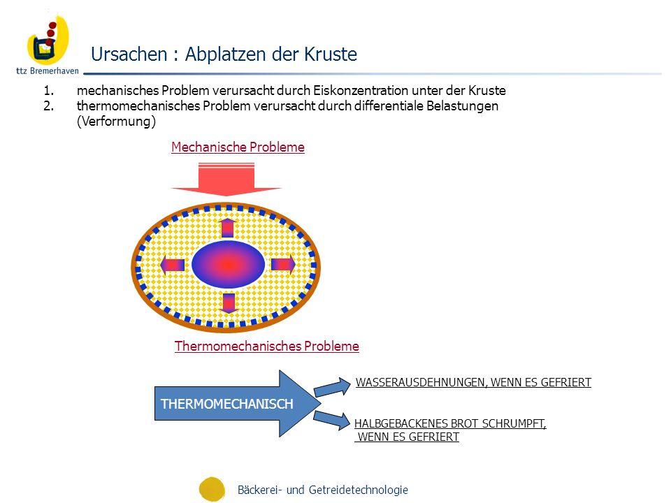 Bäckerei- und Getreidetechnologie Ursachen : Abplatzen der Kruste Mechanische Probleme THERMOMECHANISCH Thermomechanisches Probleme WASSERAUSDEHNUNGEN