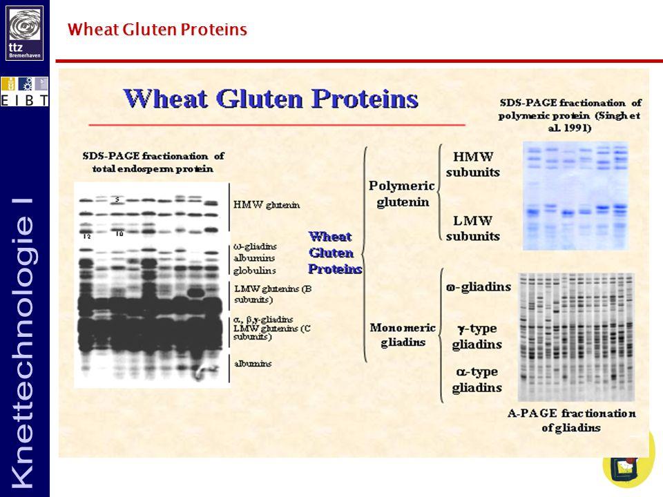Wheat Gluten Proteins