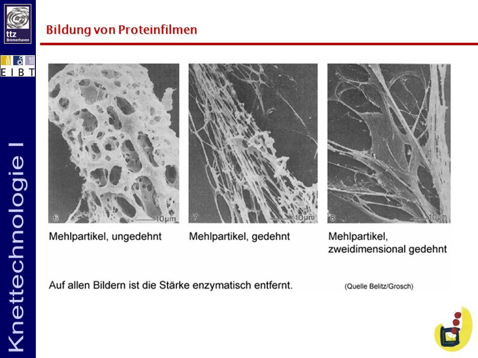Bildung von Proteinfilmen