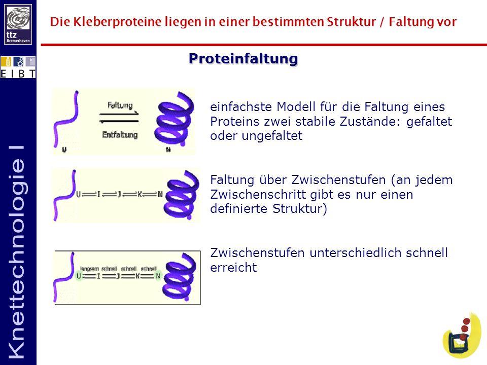 Die Kleberproteine liegen in einer bestimmten Struktur / Faltung vor Proteinfaltung einfachste Modell für die Faltung eines Proteins zwei stabile Zust