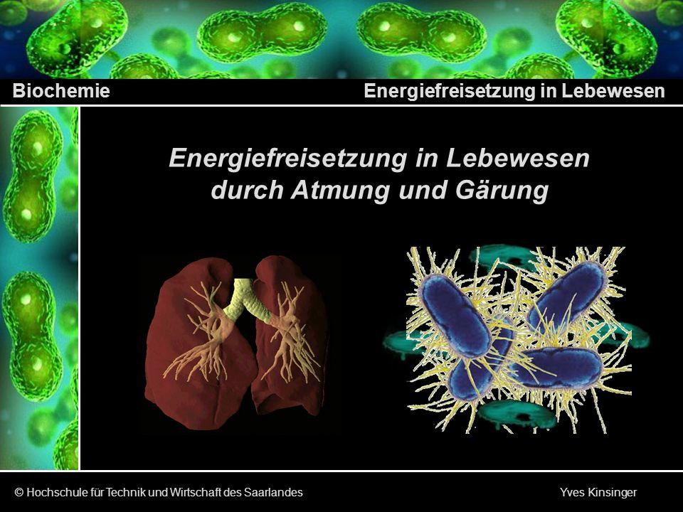 Biochemie Energiefreisetzung in Lebewesen © Hochschule für Technik und Wirtschaft des Saarlandes Yves Kinsinger Inhalt des Vortrages Arten der Energiegewinnung durch Stoffwechselvorgänge Wie und wo wird die Energie im Organismus freigesetzt Welche Stoffwechselvorgänge sind dazu nötig Glykolyse Milchsäuregärung Haupt- Themen