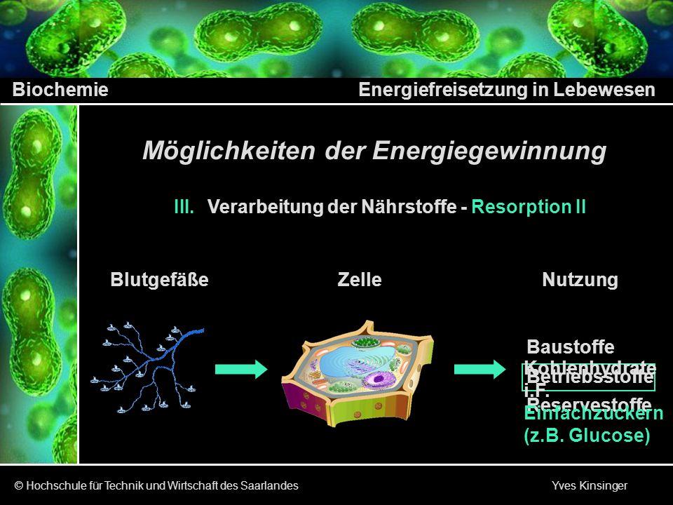Biochemie Energiefreisetzung in Lebewesen © Hochschule für Technik und Wirtschaft des Saarlandes Yves Kinsinger Möglichkeiten der Energiegewinnung III